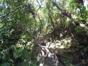 Pionowa ściana w jungli.